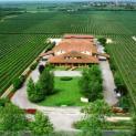 Museo del vino Pittaro